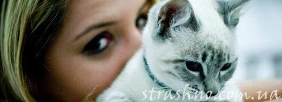 История мистическая про девушку и серую кошку