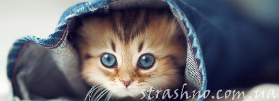 кот в штанине