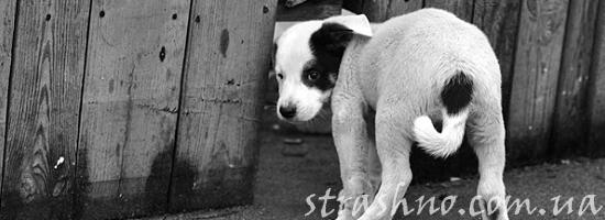 Месть собаки