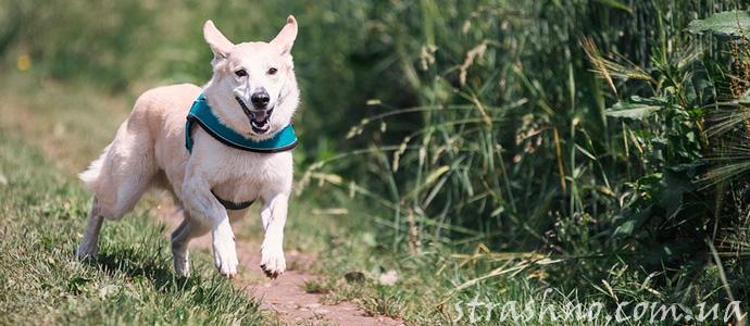 история о собаке, спасшем хозяйку