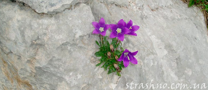 рассказ о цветке