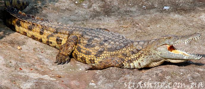 страшная история о крокодилах