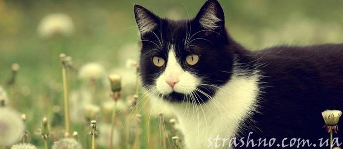 мистическая история про черного кота