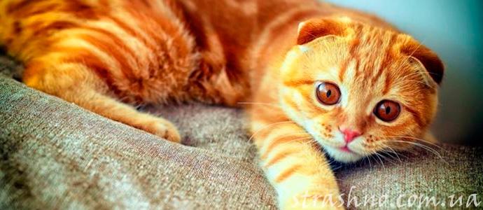 мистика с котом