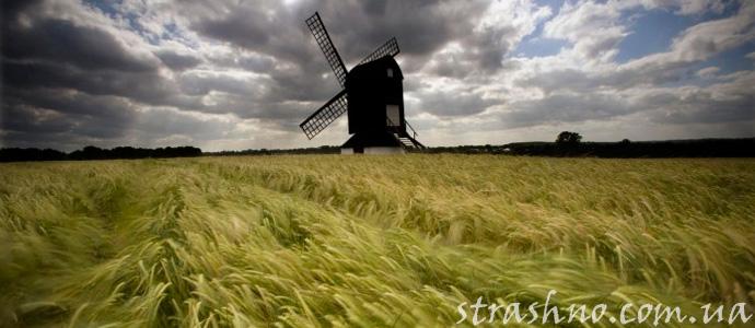 мистика на пшеничном поле