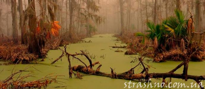 мистическое болото