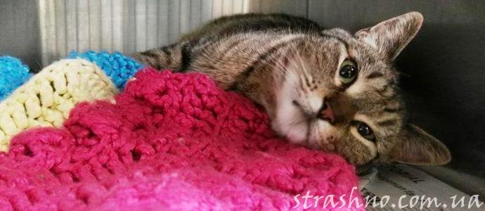 странное исчезновение кошки из дома