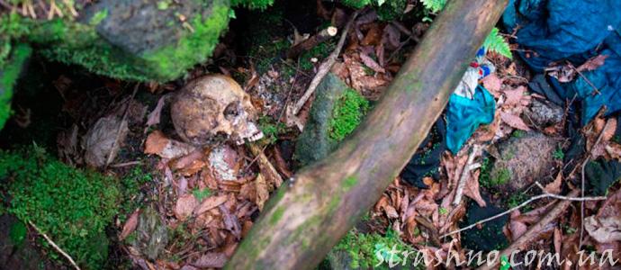 скелеты в лесу самоубийц