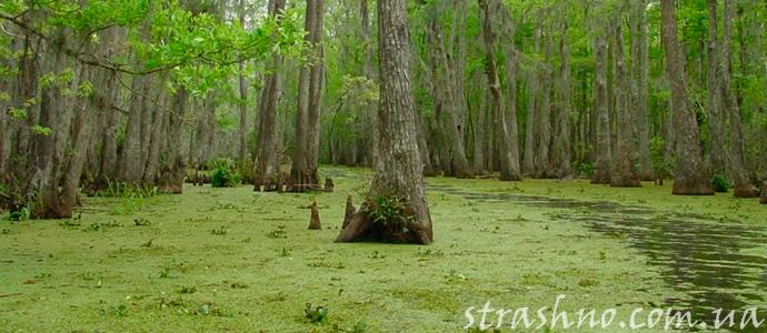 болото Луизианы