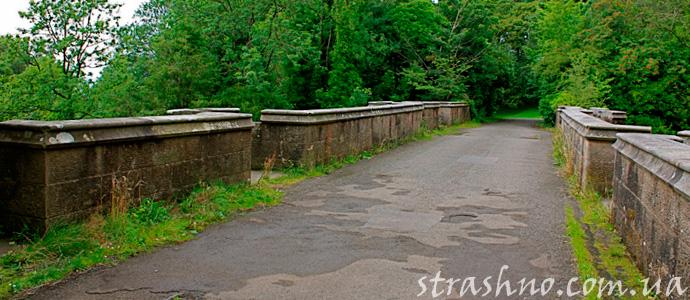 мост самоубийства собак