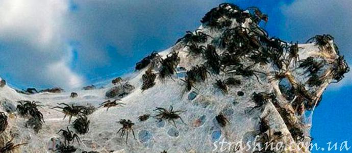 аномальный дождь из пауков