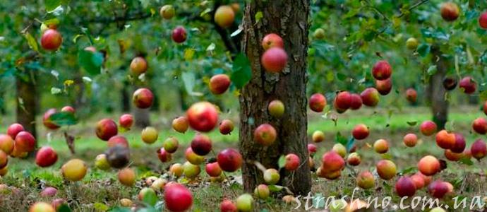 странный дождь из яблок