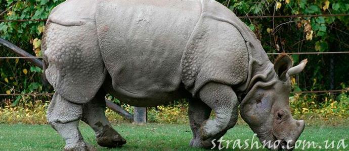 фантастический рассказ про носорога