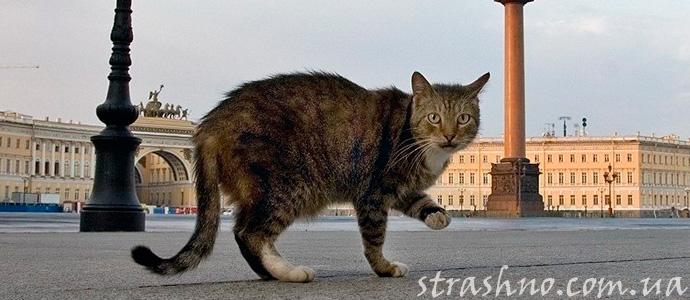 пропавший кот вернулся с того света