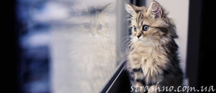 история о котенке и домовом