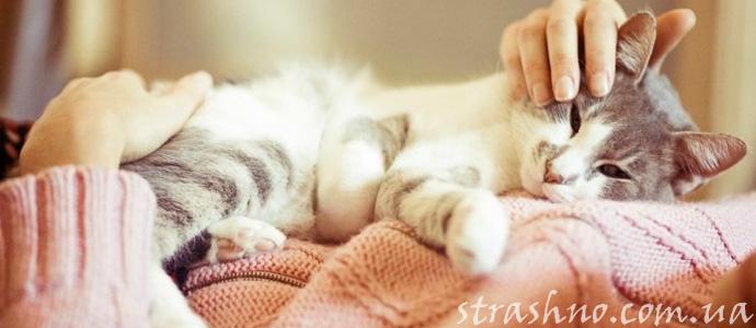 мистическая история о кошке лекаре