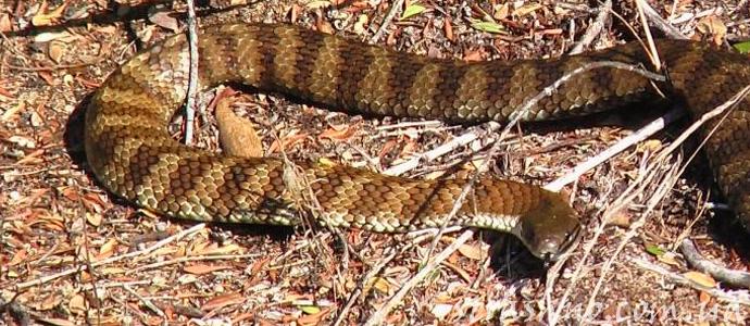мистическая история о змеее