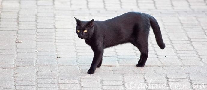 жертва черной кошки