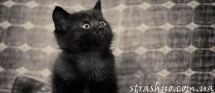 привидение в виде котенка