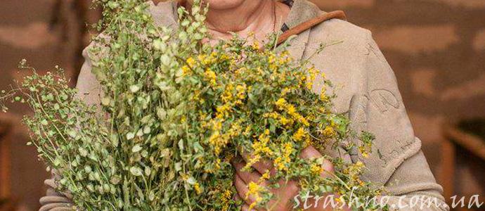 история о лечении травами и заговорами