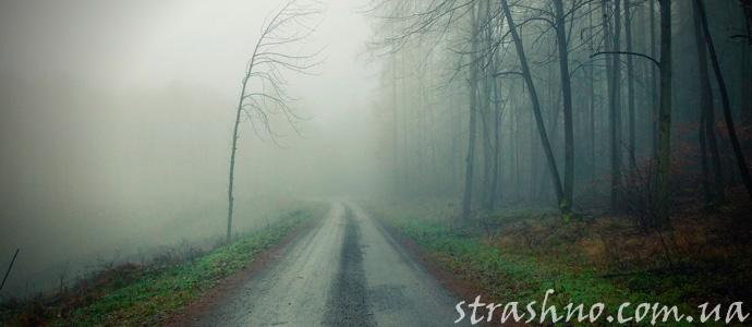 приключение на лесной дороге