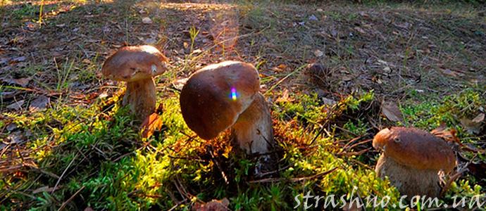 история о походе за грибами