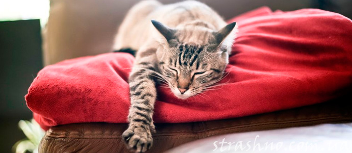 история о преданности кошки