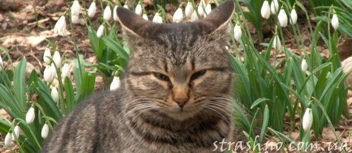история про кота спасителя
