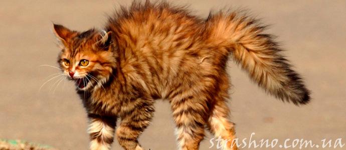история о привидении кота