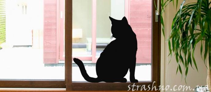 кошмар про черного кота