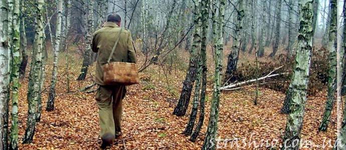 приключение грибников в лесу