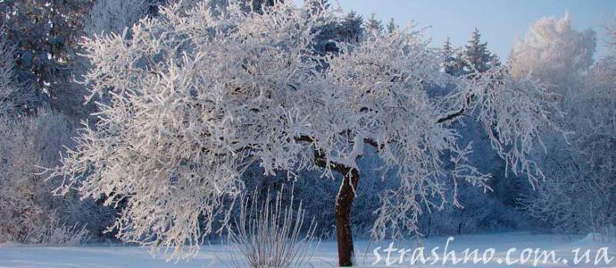 мистическое происшествие в зимнем саду