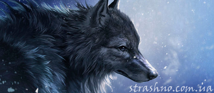 купальская история о черном волке