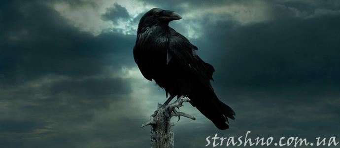 мистическая история о черном вороне