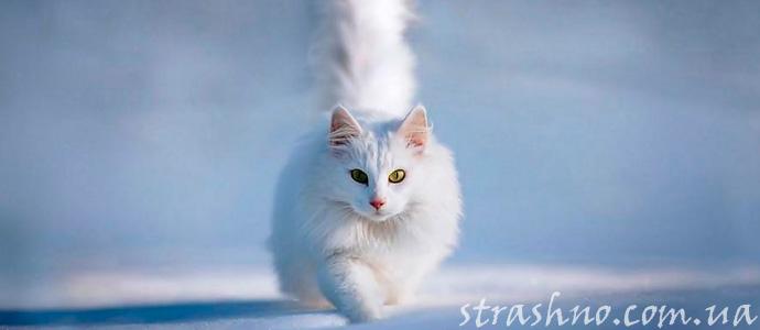 мистическая история о помощи умершей кошки