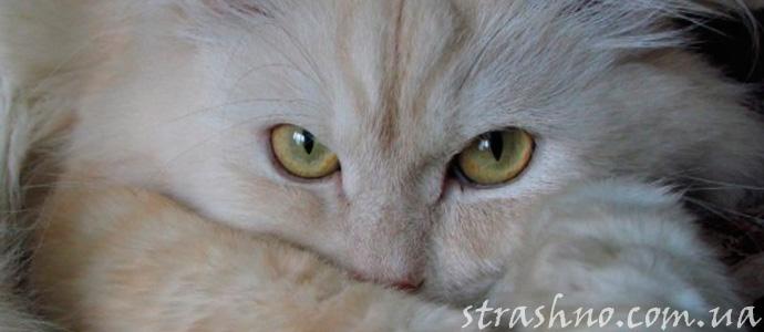 история о кошке экстрасенсе