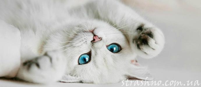 история о загадочном котенке