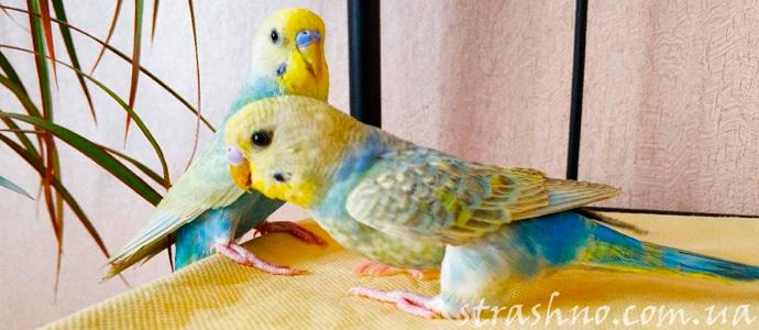 мистическая история о домашних попугаях