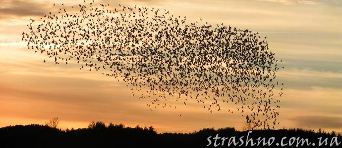 странная гибель птиц, падающих с неба