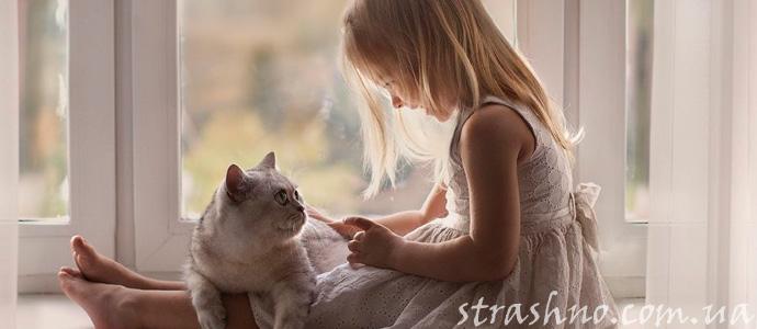 история о преданности кошек