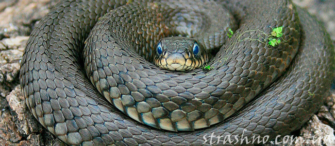 мистическая история о змеях