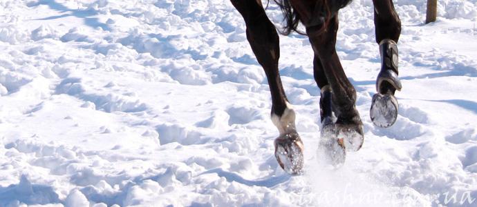 мистический стук копыт по снегу