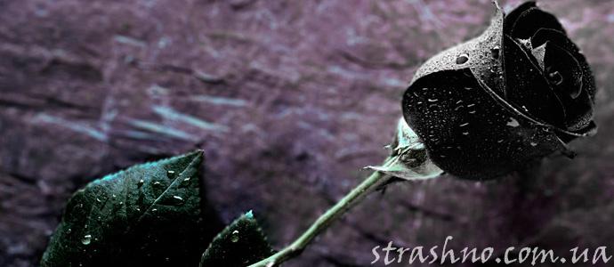вещий сон про черные розы