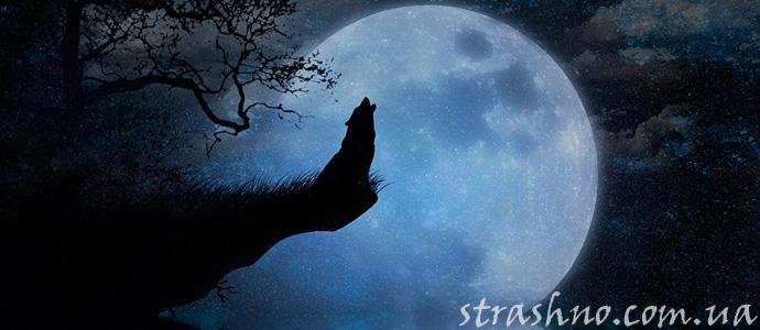 мистическая история о вое собаки