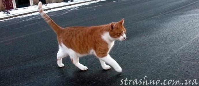 мистчиеская история о рыжем коте и старухе