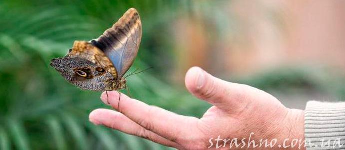 мистический знак от ангела-хранителя