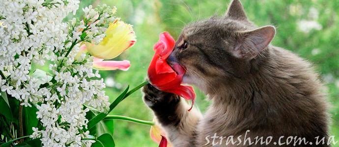 запах цветов, как подсказка ангела хранителя