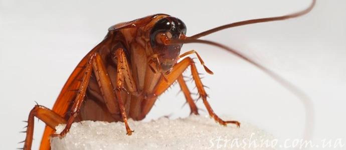 мистическая история о дружбе с тараканом