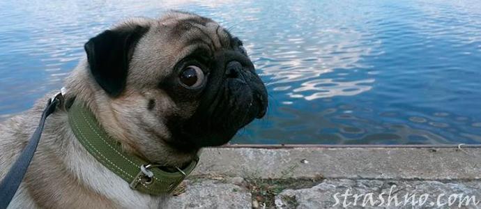 история о собаке и знакомстве