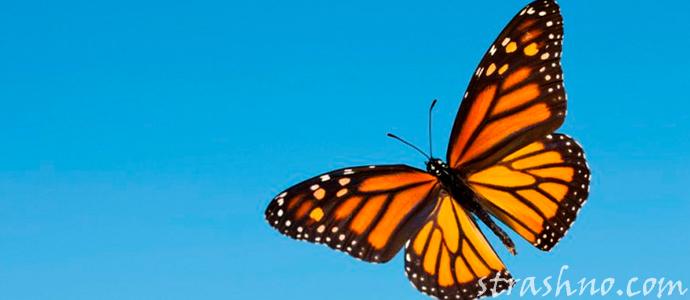 мистическая история о странной бабочке